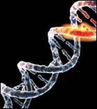 mutacion ADN