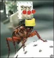 Cucaracha cyborg