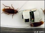 Cucarachas_robot