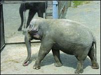 Elefantes_espejo