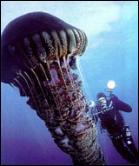Medusa gigante