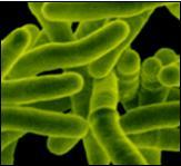 Microbios