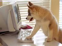 Perra con teclado